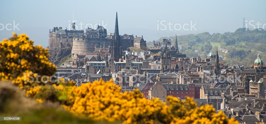 Edinburgh Castle  spring, yellow gorse meadow, Scotland. stock photo