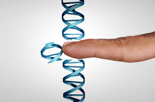 Editing Genes Editing genes and gene manipulation as a CRISPR genome engineering medical biotechnology health care concept with a DNA strand with 3D illustration elements. gene therapy stock pictures, royalty-free photos & images