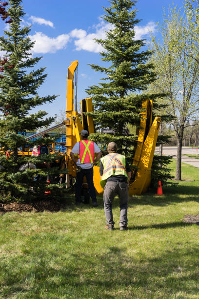Edmonton, Canada, May 11, 2018: Contractor´s work crew planting  mature spruce tree with tree spade equipment stock photo