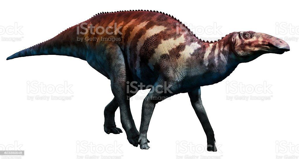 Edmontosaurus stock photo