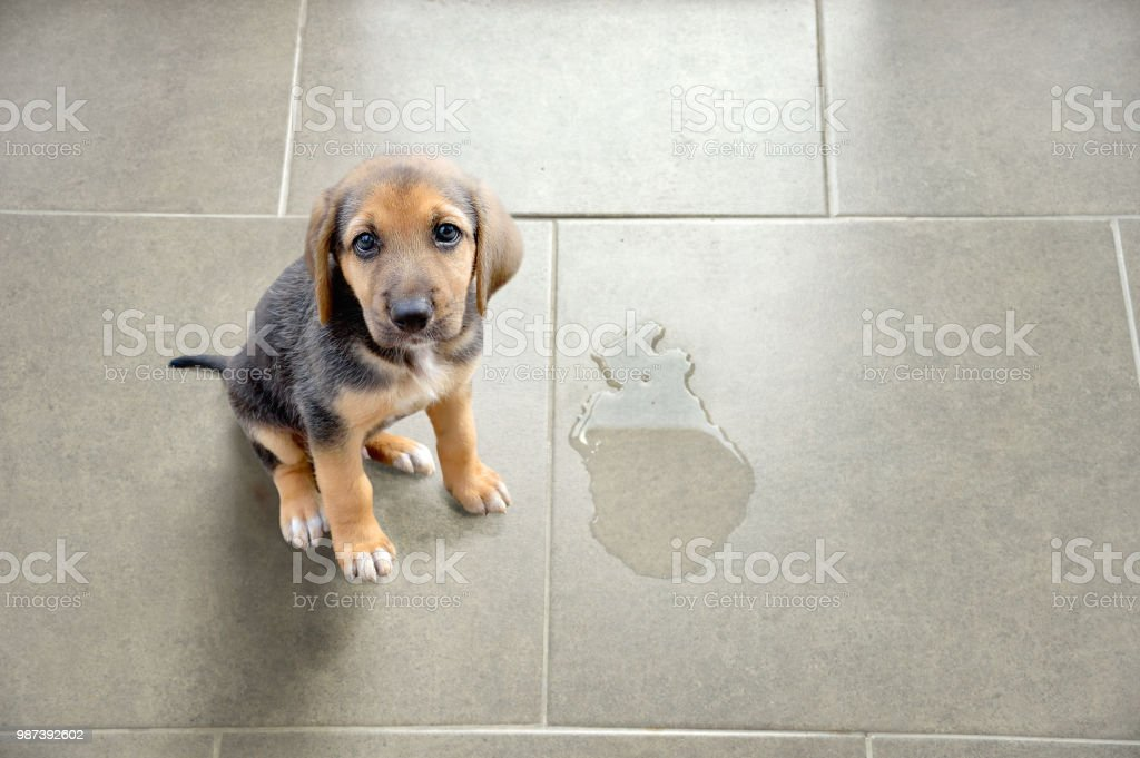 educate your pet stock photo