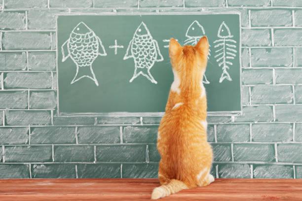 Bildung-Idee über foxy Katze studierte Mathematik am Beispiel der Zugabe von Fisch – Foto