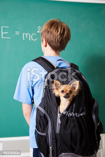 istock Education: Pre-teenage student brings his pet dog back to school. 590060634