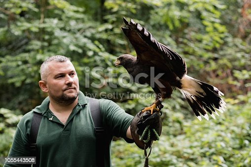 Point of view shot of a man doing an educational display with a harris hawk.