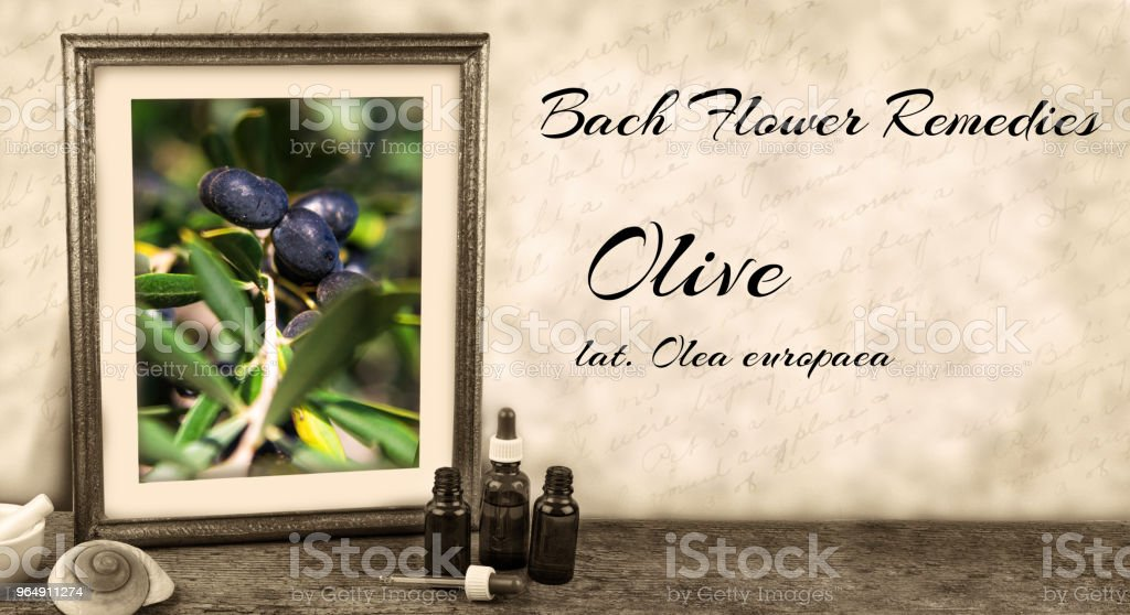 Edward Bach - Bach Flower Remedies - Olive, olea europaea royalty-free stock photo