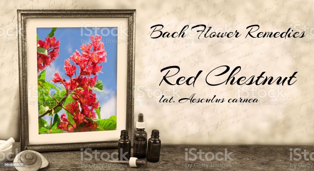 Edward bach bach flower remedies red chestnut aesculus carnea stock edward bach bach flower remedies red chestnut aesculus carnea royalty free stock mightylinksfo
