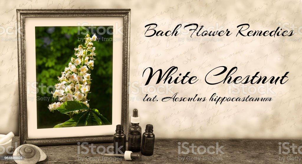 Edward bach bach flower remedies white chestnut aesculus edward bach bach flower remedies white chestnut aesculus hippocastanum royalty free stock mightylinksfo