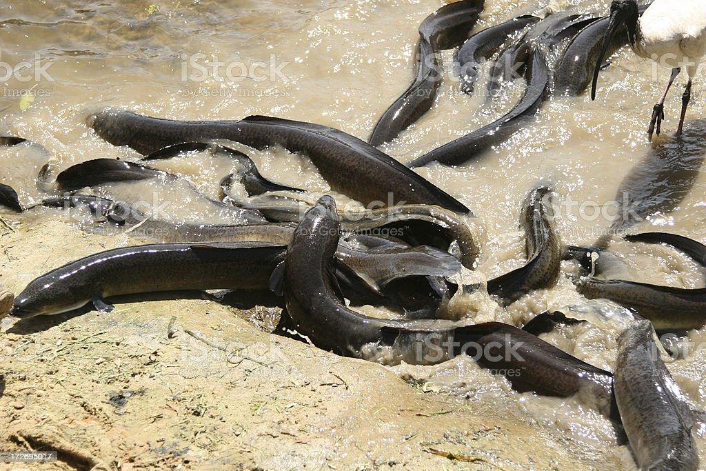 Eels – Foto
