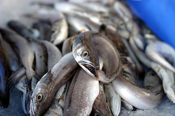 Eels stock photo