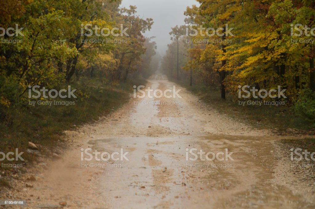 Eerie autumn road in the fog