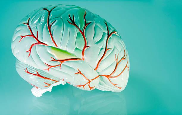 Eerie Brain stock photo