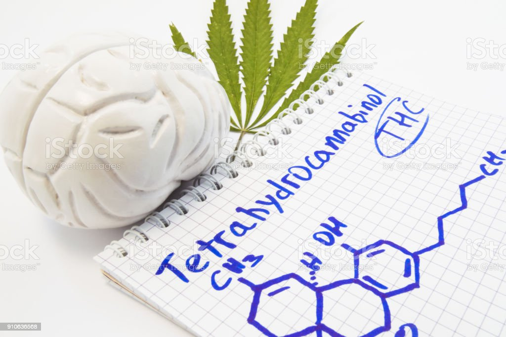 Effects and action of tetrahydrocannabinol (THC) on human brain. Anatomical model of brain is near leaf of hemp and notepad inscribed with title tetrahydrocannabinol and drawn it chemical formula stock photo