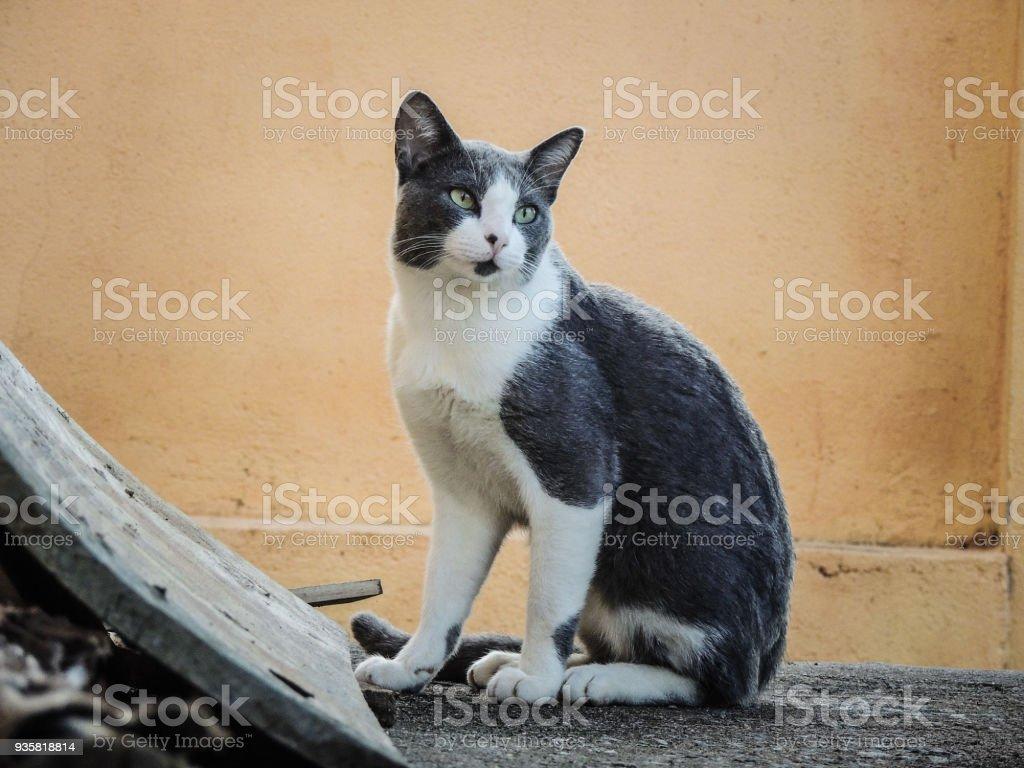 Egean Cat Sat in a House's Yard stock photo