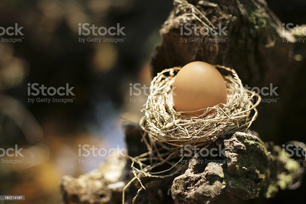 Egg amonst rocks royalty-free stock photo