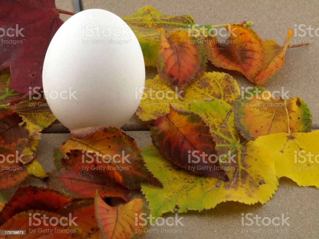 Egg and leaf royalty-free stock photo