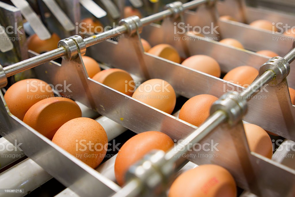 Egg factory...production line with fresh eggs stock photo