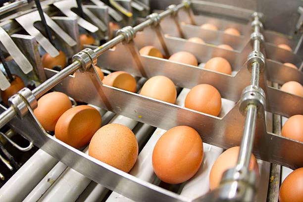 ei factory.production linie mit frischen eiern - eierverpackung stock-fotos und bilder