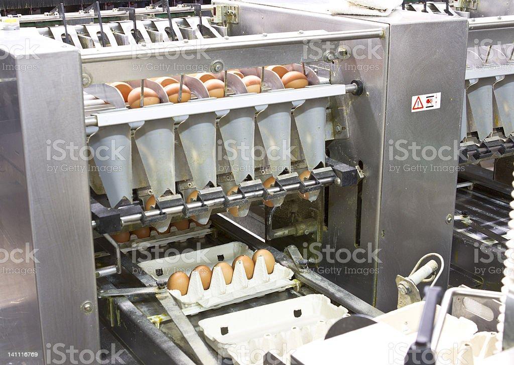 Egg farm royalty-free stock photo