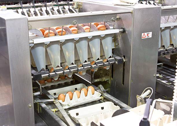 ei farm - eierverpackung stock-fotos und bilder