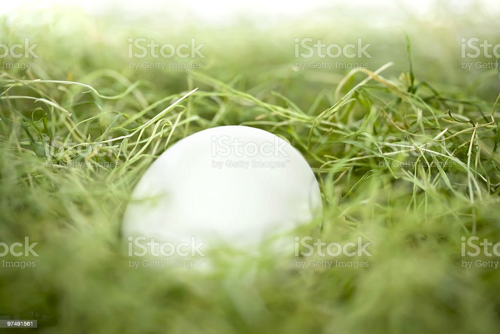 Egg in a grass royalty-free stock photo
