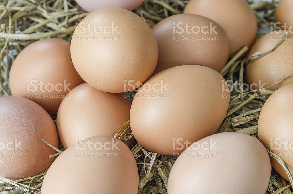 Egg in hay nest royalty-free stock photo