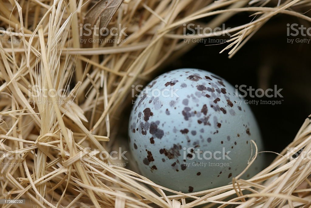 egg in nest royalty-free stock photo