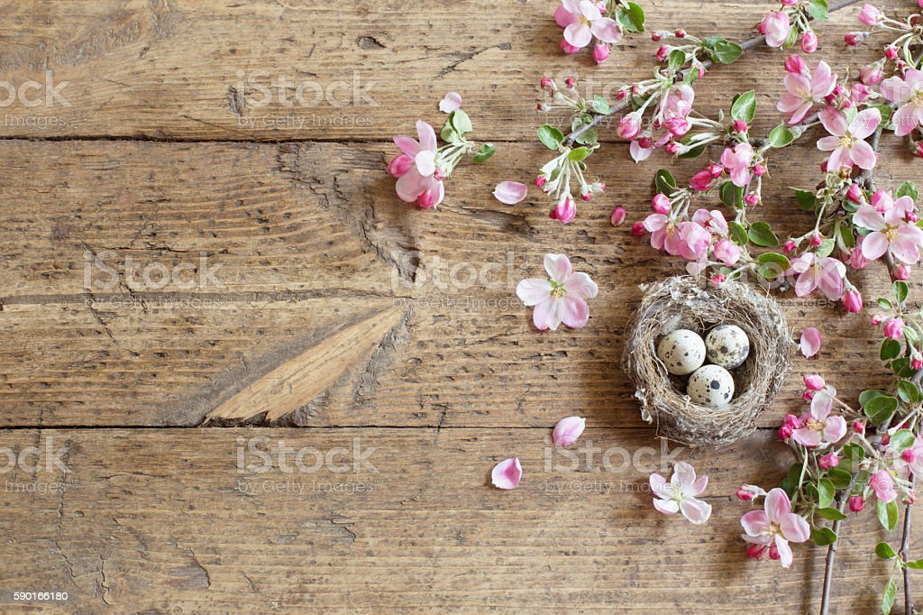 egg in nest with pink flowers stock photo
