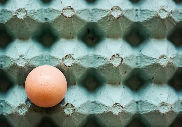 Egg in rustic paper box stock photo