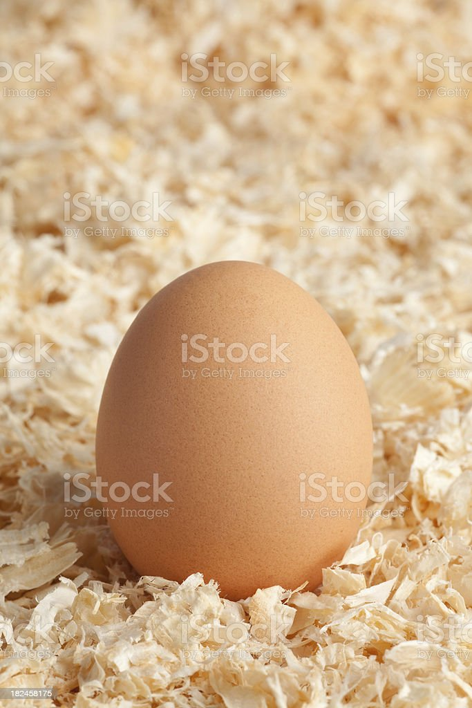Egg in wood chips royalty-free stock photo