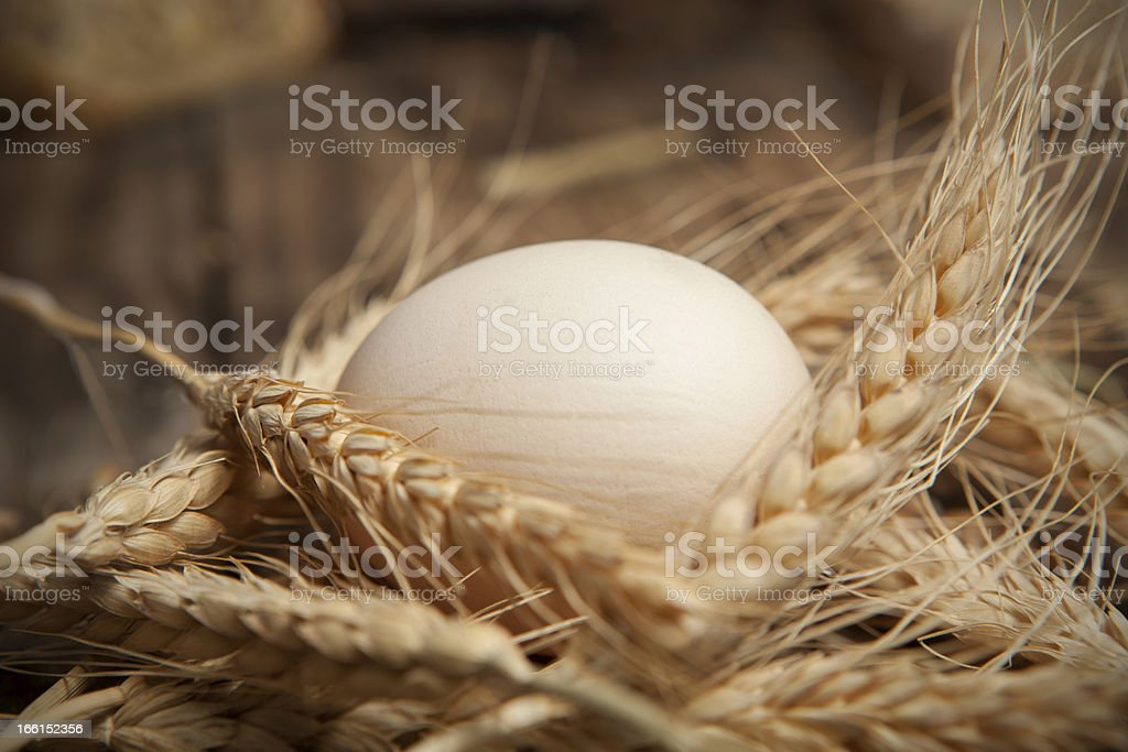 egg nest in wheat royalty-free stock photo