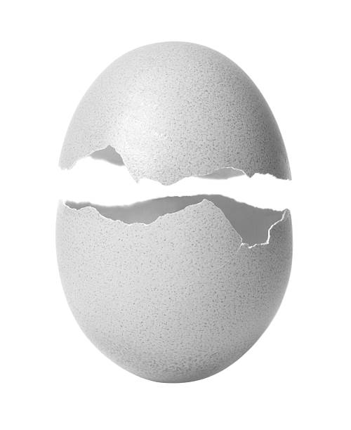Egg  animal egg stock pictures, royalty-free photos & images