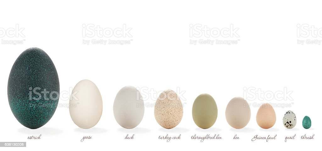 Huevo  - foto de stock