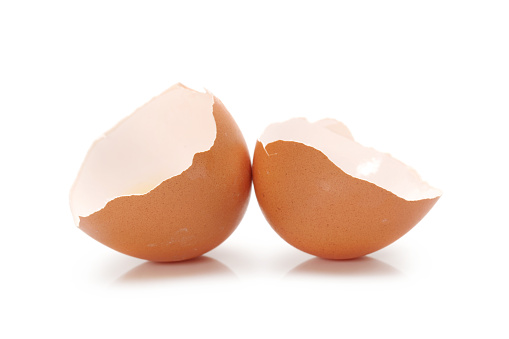 Egg shell  on a white background