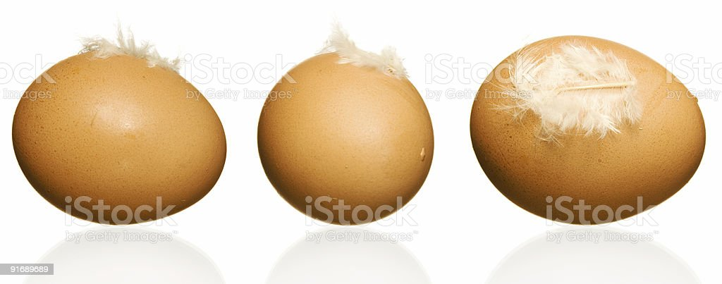 Egg with plumelet royalty-free stock photo