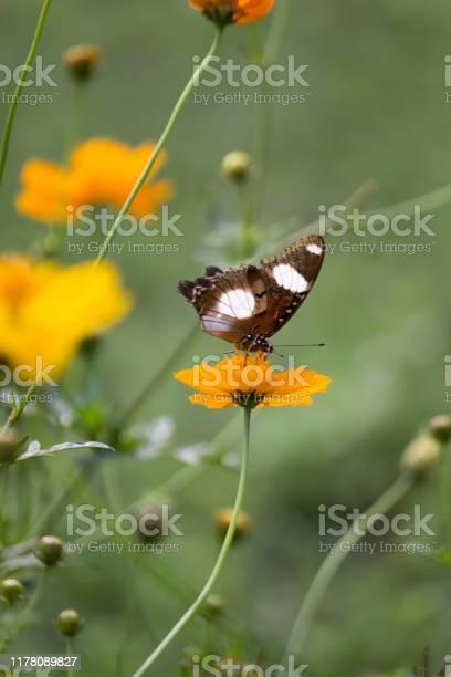 Eggfly butterfly picture id1178089827?b=1&k=6&m=1178089827&s=612x612&h=c6rtfftxsrvxv7db1ljko0xdqmjhdjmrey mdgrvjjs=