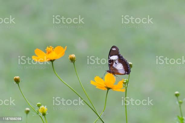 Eggfly butterfly picture id1187656259?b=1&k=6&m=1187656259&s=612x612&h=eyj0jgp1okmdxe6tdp9nvwogjkx0axpenax v0pnqzy=