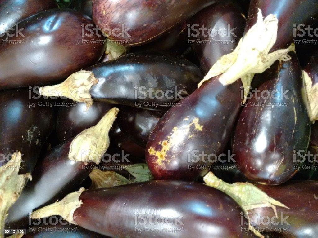 Eggplant, aubergine, asian eggplant, oriental eggplant, italian eggplant, garden eggplant, egg plant, pingtung long eggplant, poor-man's-caviar, guinea squash, gully bean, chinese round mauve eggplant, pea apple, jew's apple or mad apple stock photo
