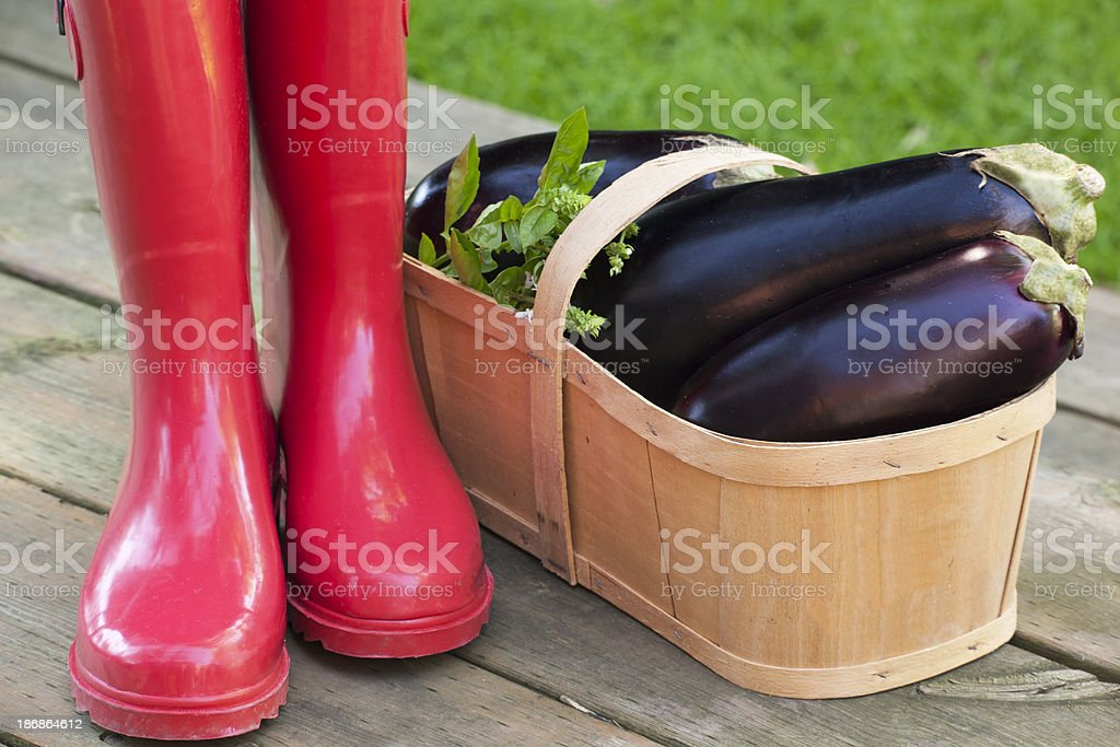 Eggplants and Red Rubber Boots stock photo