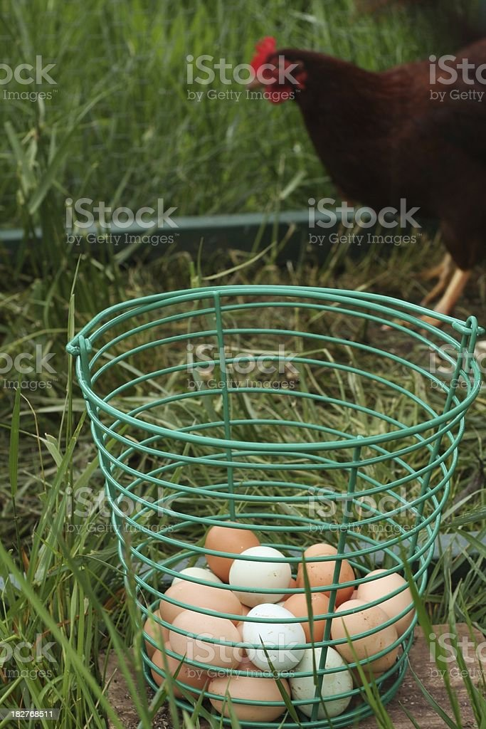 Eggs and Chickens royalty-free stock photo