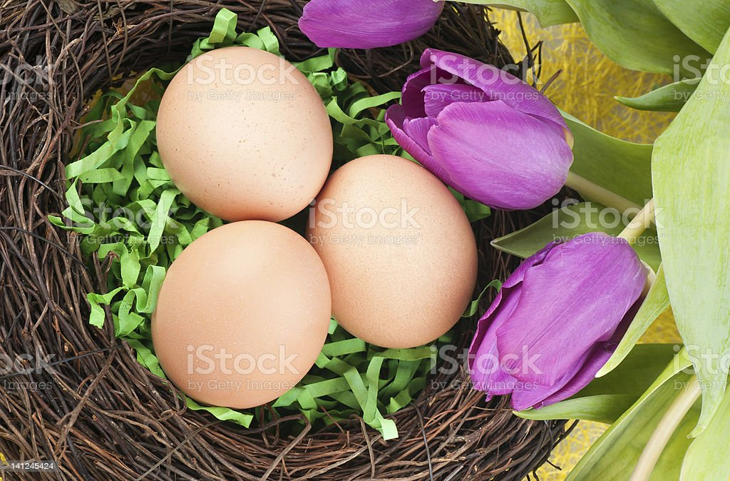 Eggs and tulips royalty-free stock photo