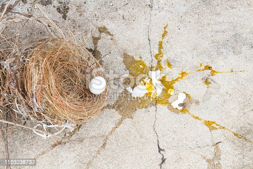 Eggs bird broken, it is falling out of nest with eggshell and yolk of eggs bird on the gray stone ground. Investment and misadventure concept.