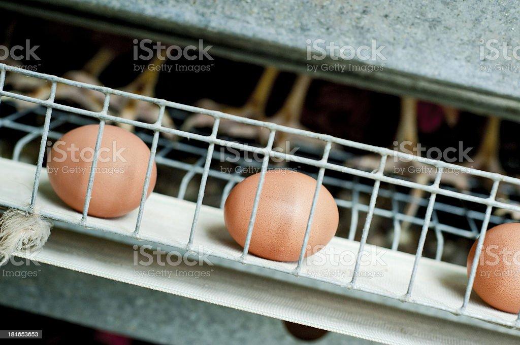 Eggs Company. royalty-free stock photo