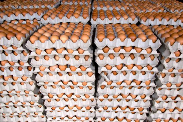 eier von chicken farm in-package - eierverpackung stock-fotos und bilder
