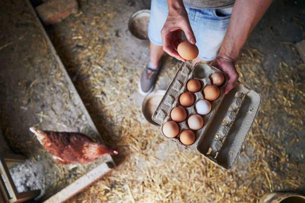 Eggs from small organic farm stock photo