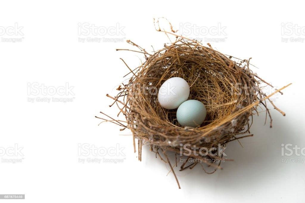 eggs in bird nest stock photo