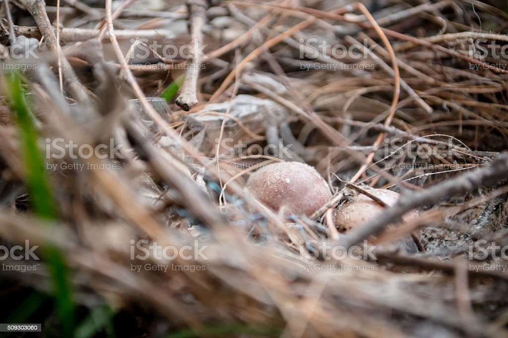 Eggs in bird's nest stock photo