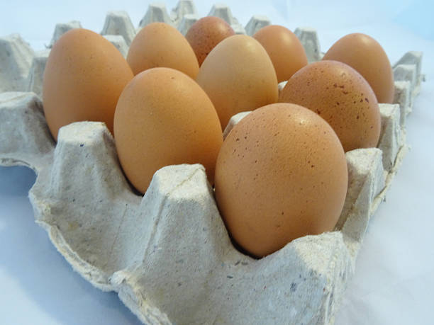 Eggs in egg carton stock photo