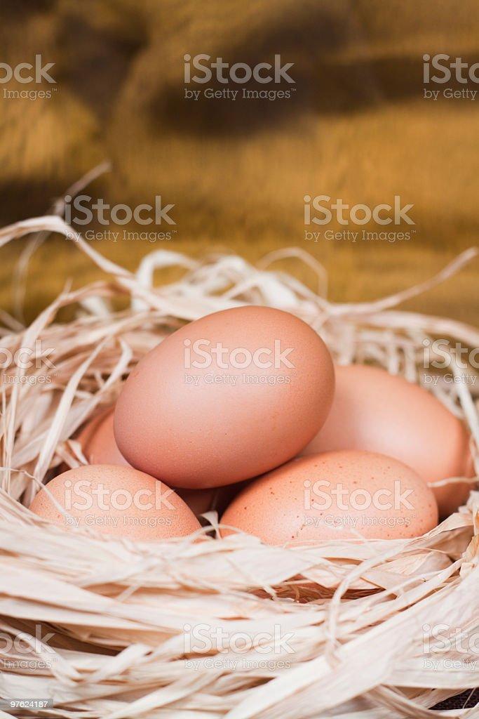 Eggs in Nest royaltyfri bildbanksbilder