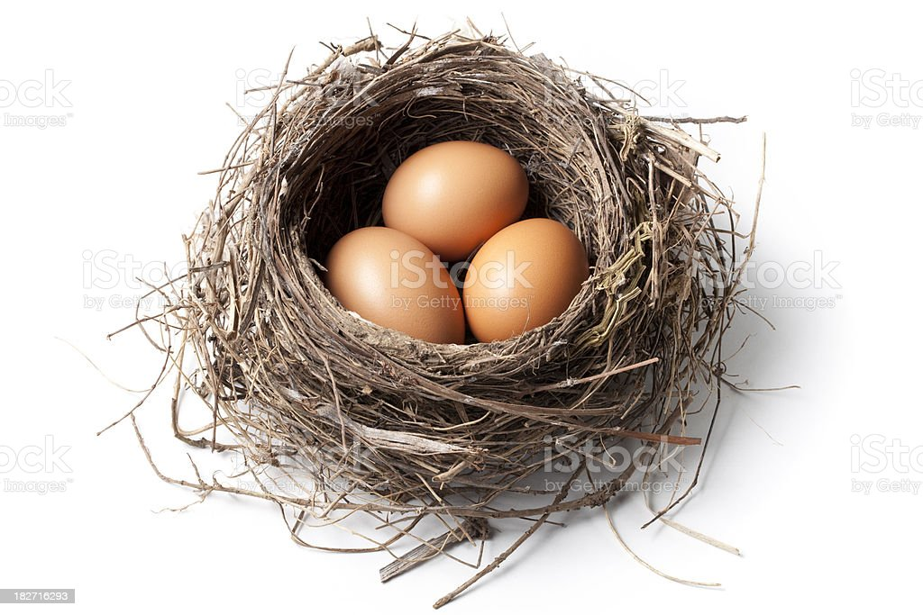 Eggs in the nest stock photo