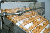 Animal Egg, Egg, Factory, Conveyor Belt, Food